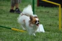Flavie - agility, 12 měsíců